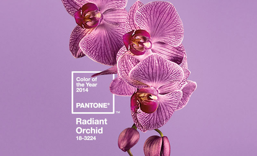 Color of the Year 2014 Radiant Orchid | The Knittting Vortex